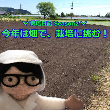 今年は畑で、栽培に挑む!