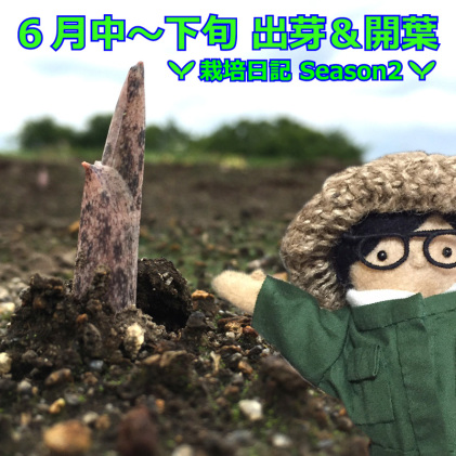 6月中〜下旬  出芽&開葉